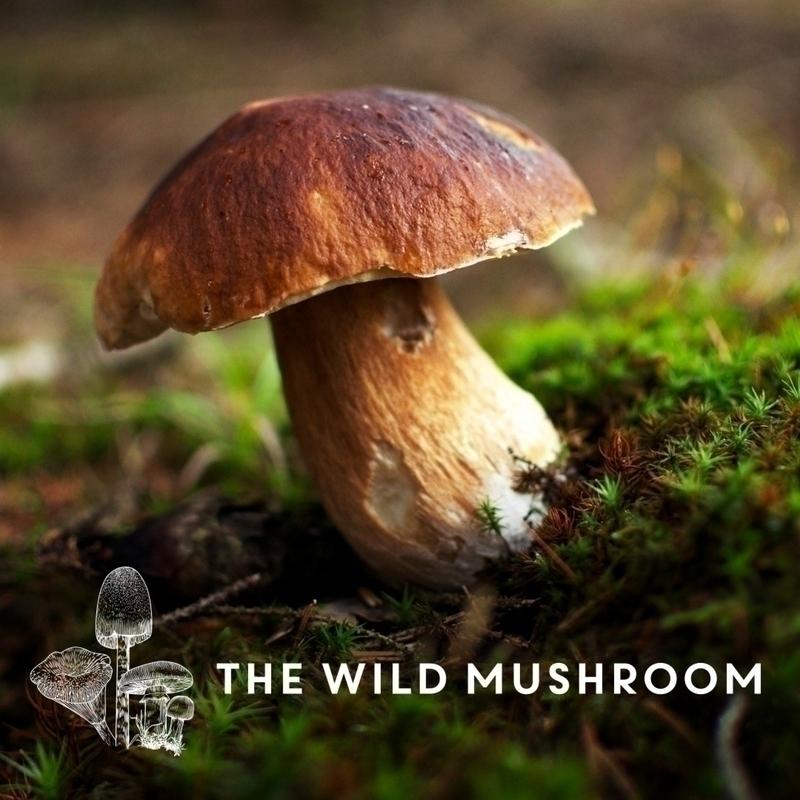 Wild Mushroom Forage Monday 18th October 2021